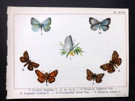 Joanny Martin 1902 Antique Butterfly Print 18